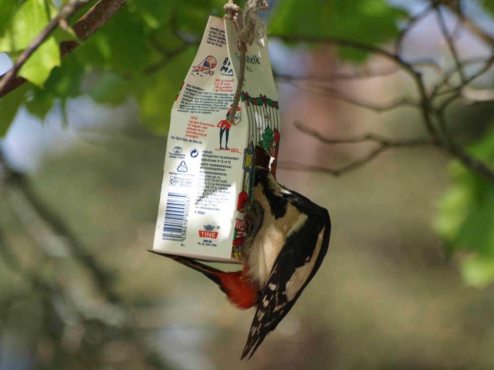 lage fuglemat selv oppskrift