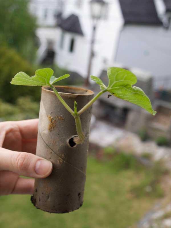 vokser det gjennom fiberduk