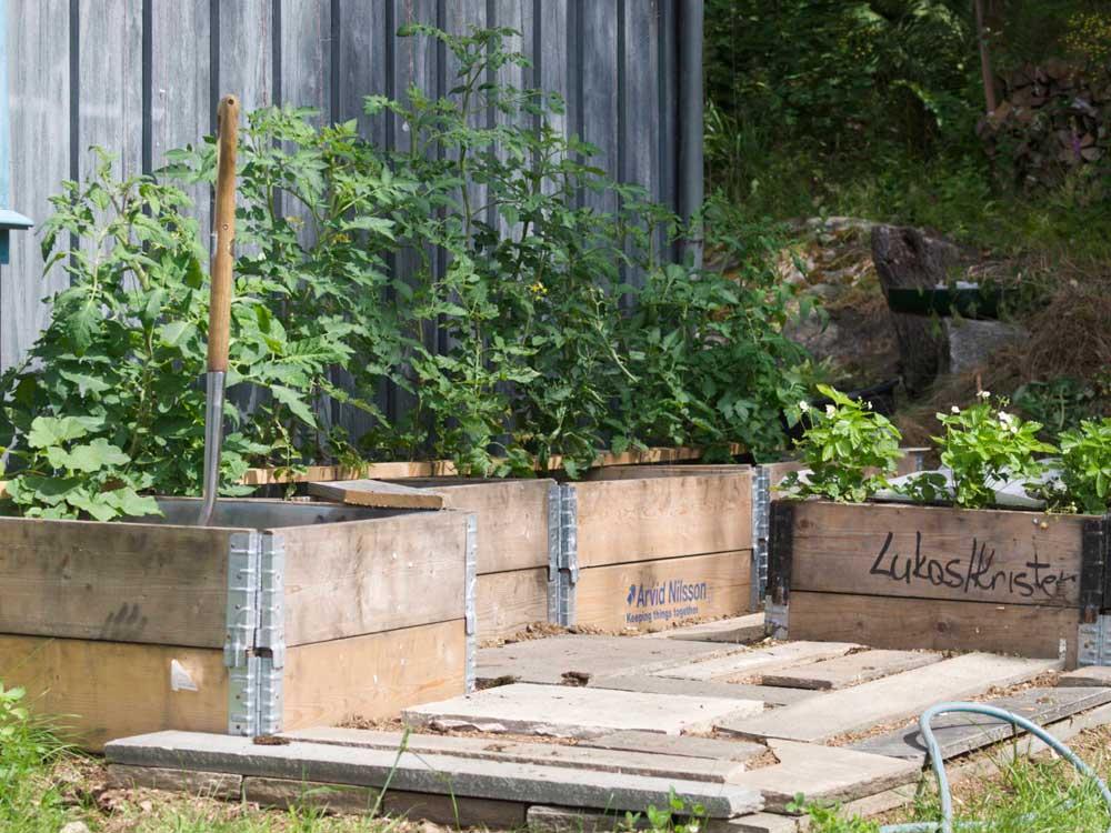 Grønnsakshage i pallekarmer