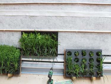 Levende vegg: Mal med planter, inne og ute!