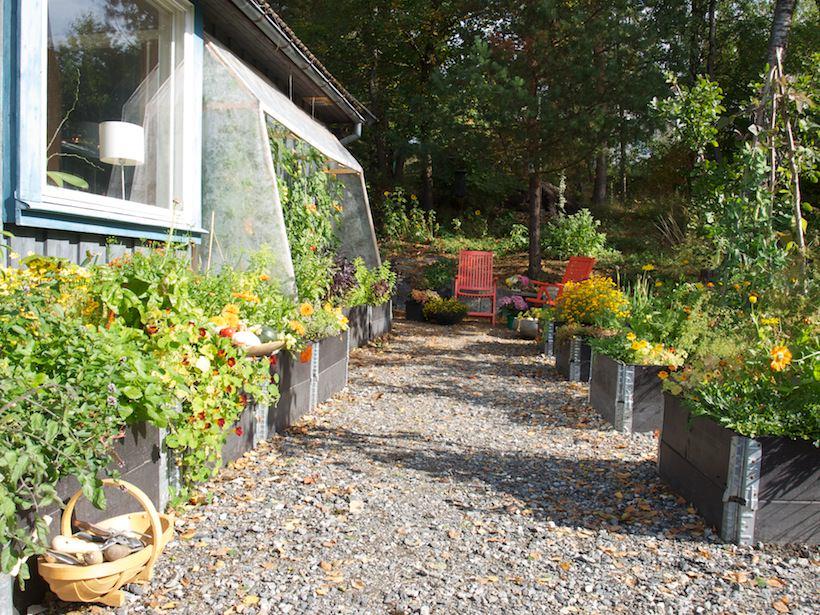 Kjøkkenhagen på høsten, frodig og flott