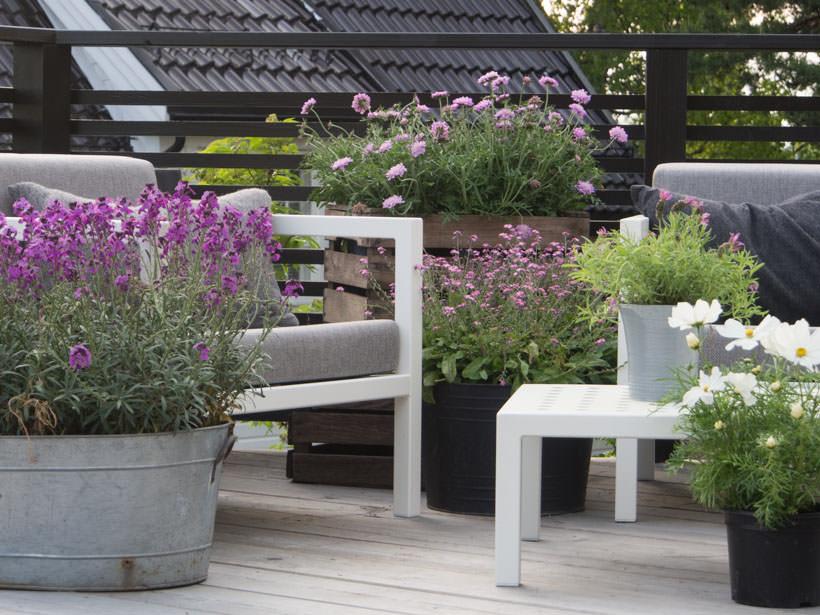 Tips til krukker: 11 blomster som gleder deg, humla og sommerfuglene! - Moseplassen