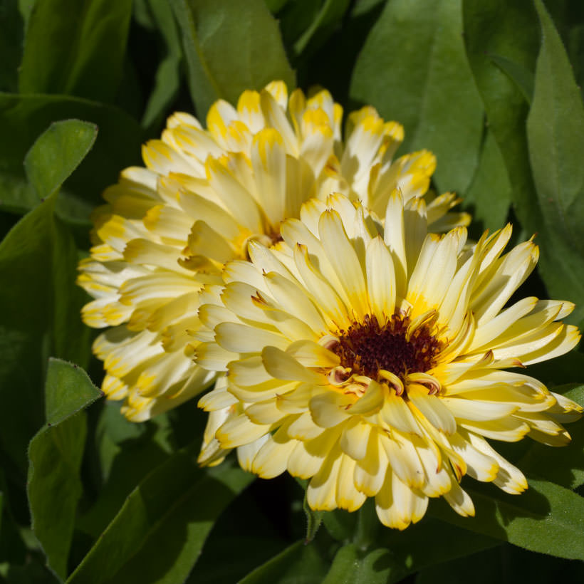 humlevennlige planter som blomstrer i mai