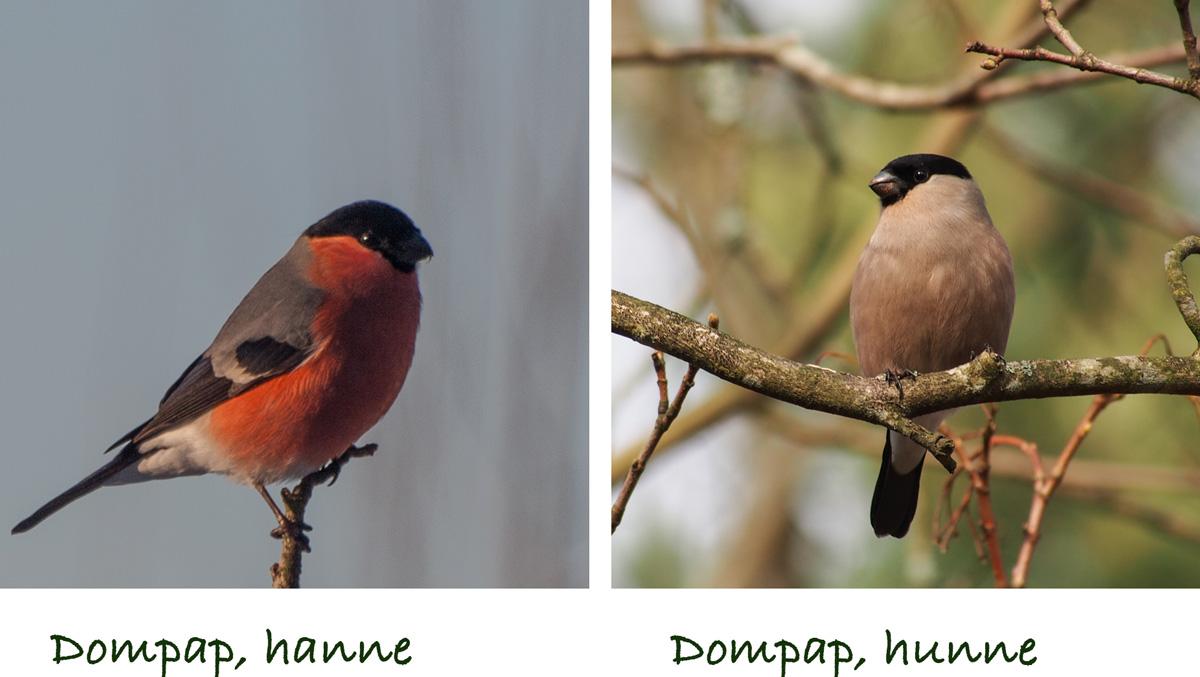 småfugler på matbrettet