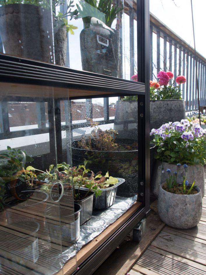 Varmematte med småplanter i bunn på minidrivhus Juliana City gardener