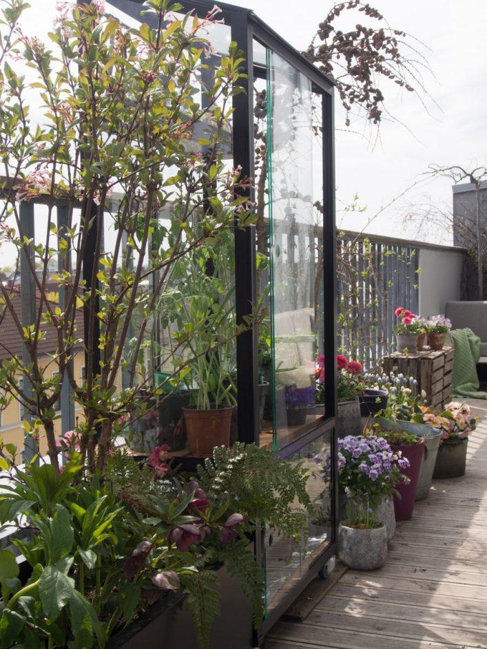 Minidrivhus på balkong, med krukker og planter