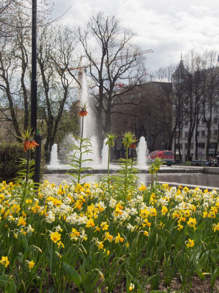 Blomsterbed i Spikersuppa med pinseliljer og keiserkrone