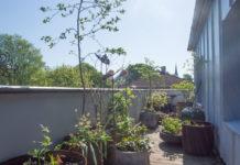 balkong med trær og busker