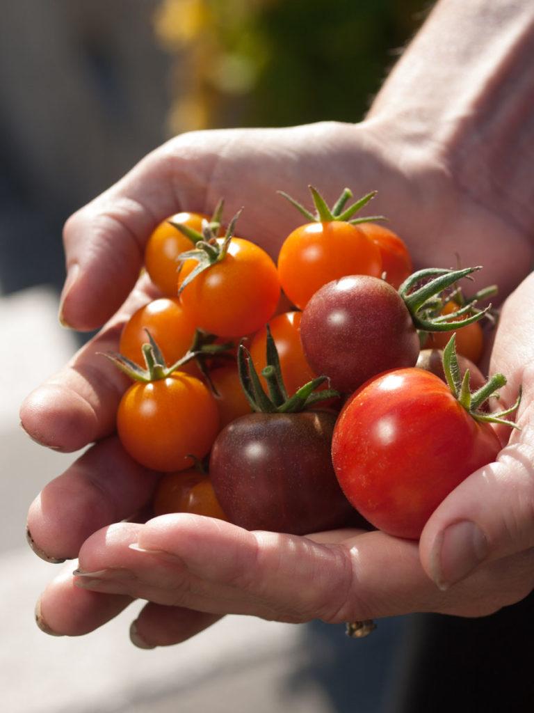 cherrytomater er som skapt for grillen, ferdig innpakket
