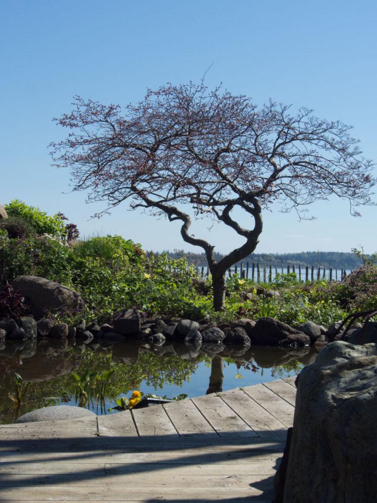 En hagedam er en oase for mange