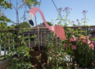 Flamingo som beveger seg i vinden