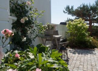 sitteplass mellom syrinhortensia og roser og hvitt tregjerde
