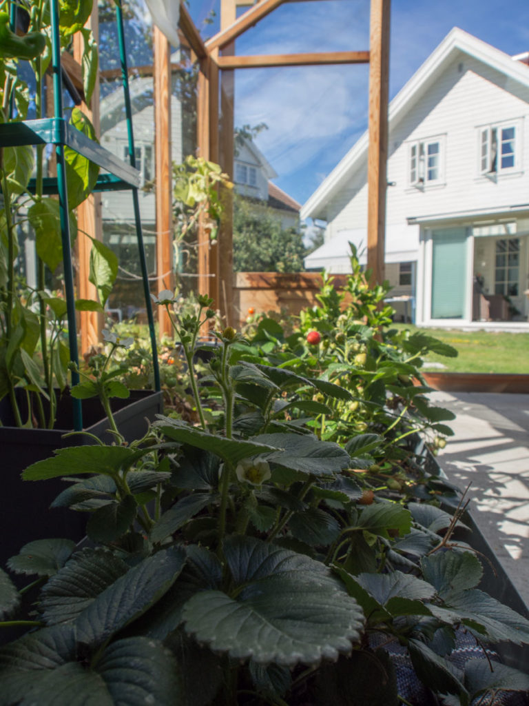 Drivhus i tre, med planter