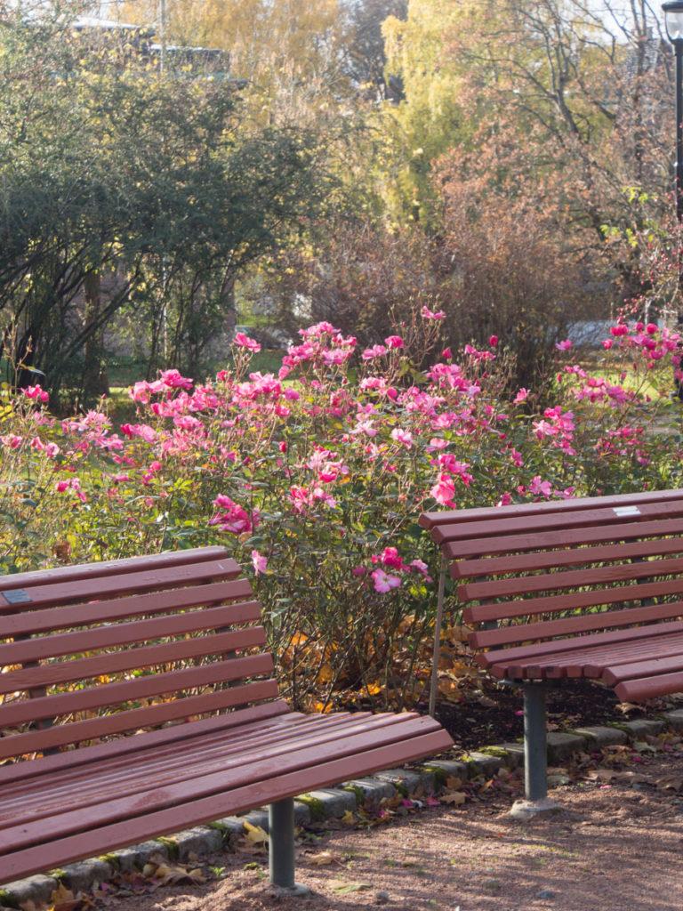 Betty Prior roser mellom benker i Frognerparken
