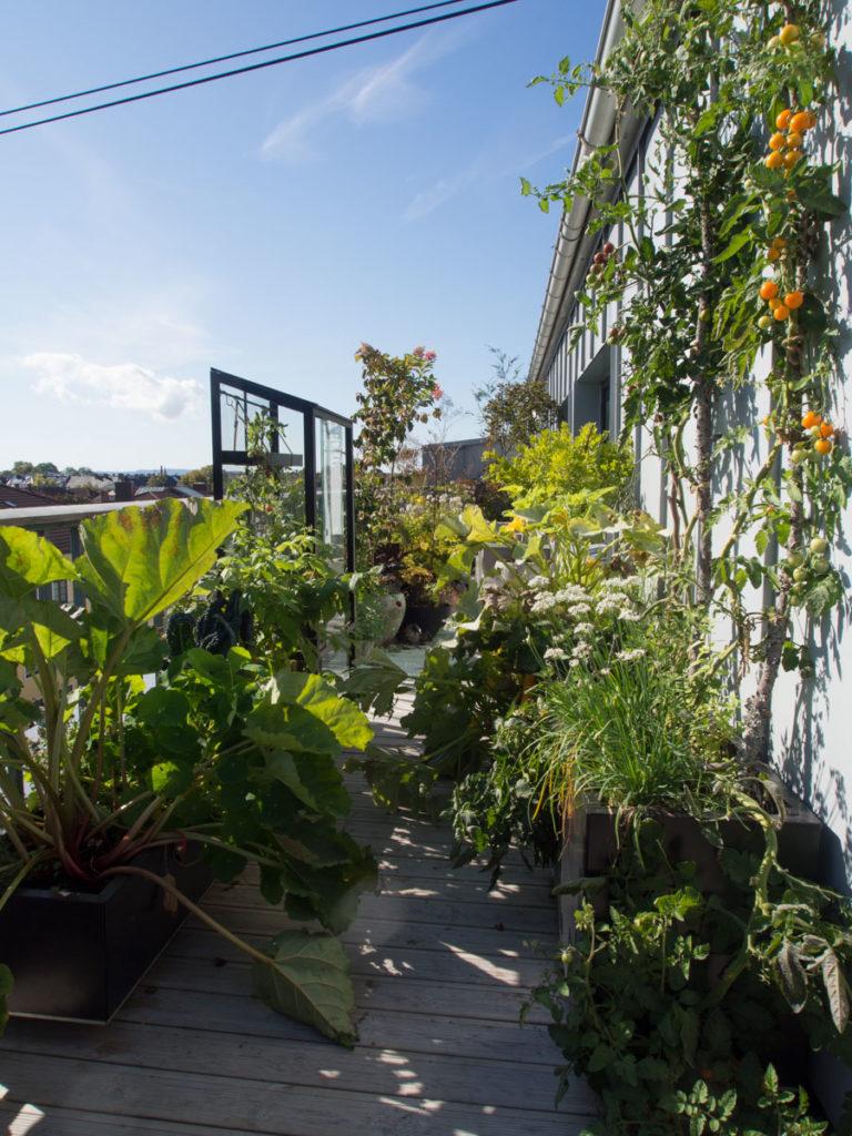 kjøkkenhage på balkong, med planter i kasser og krukker