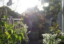 Busker, trær og stauder i krukke på balkong