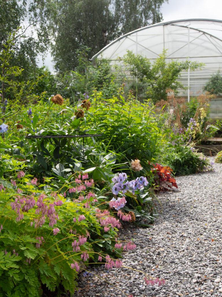 Besøkshagen hos Mjærum staude og urtesalg, med gartneriet  (butikken) i bakgrunnen