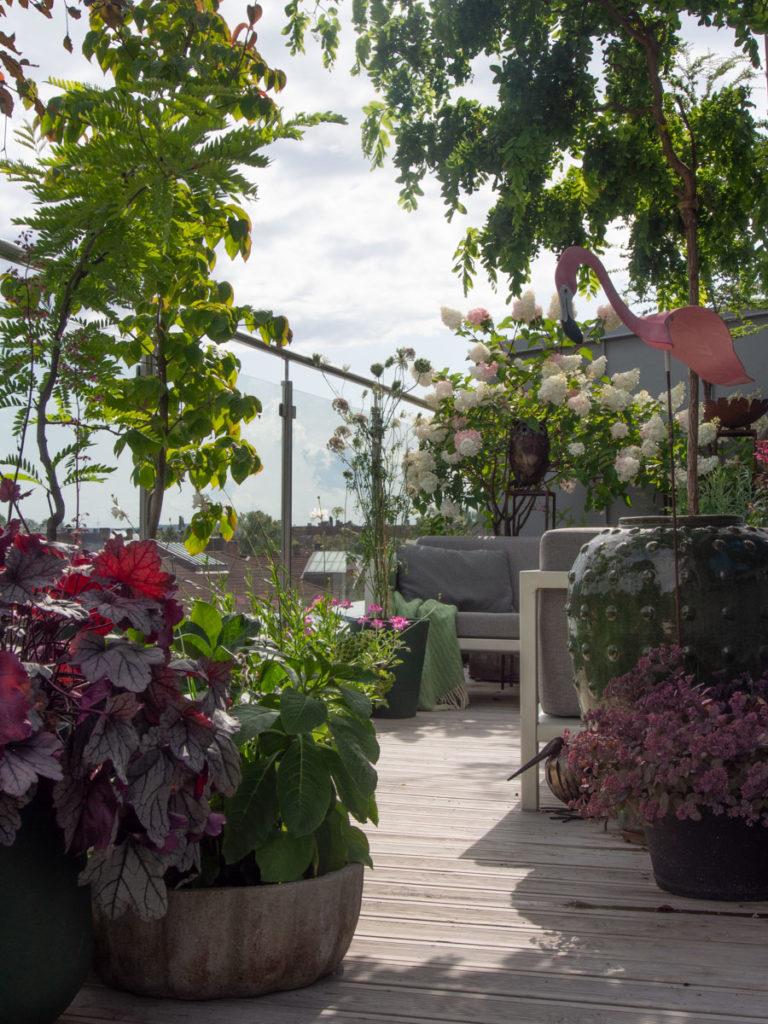Takterrasse med mange krukker og planter, grønnmalte og svartmalte krukker sammen med umalte krukker