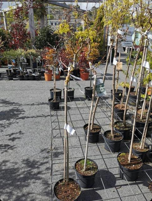 Bilde tatt på hagesenteret Hageland Oddernes, som viser Twisty Baby og andre varer